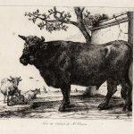 Dominique-Vivant DENON [1747-1825], d'après Paul POTTER [1625-1654], Taureau, eau forte. © musée Denon